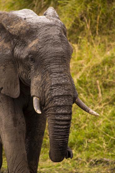 African Elephant, Sabi Sand Reserve, Mpumalanga, South Africa-Stuart Westmorland-Photographic Print