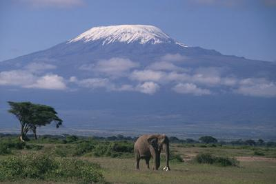 https://imgc.artprintimages.com/img/print/african-elephant-standing-in-front-of-mt-kilimanjaro_u-l-pzr40m0.jpg?p=0