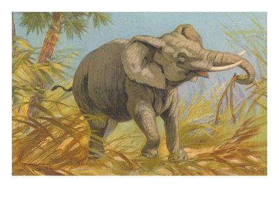 https://imgc.artprintimages.com/img/print/african-elephant_u-l-p6mdav0.jpg?p=0