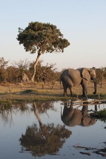 African Elephant-Sergio Pitamitz-Photographic Print