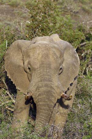 https://imgc.artprintimages.com/img/print/african-elephants-008_u-l-q12ttdo0.jpg?p=0