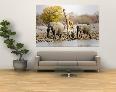 African Elephants and Giraffe at Watering Hole, Namibia-Joe Restuccia III-Giant Art Print