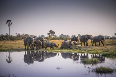https://imgc.artprintimages.com/img/print/african-elephants-at-the-water-s-edge-in-botswana-s-moremi-game-reserve_u-l-q1bv71d0.jpg?p=0