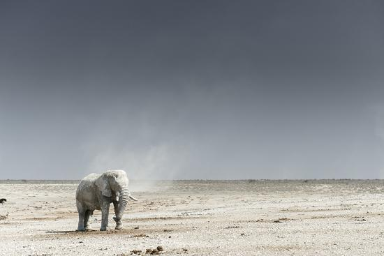 African Elephants, Loxodonta Africana, Standing with Dust Devil in the Background-Chris Schmid-Photographic Print