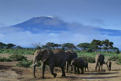 https://imgc.artprintimages.com/img/print/african-elephants-walking-in-savanna_u-l-pzr3y10.jpg?p=0