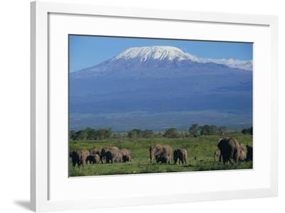 African Elephants Walking in Savanna-DLILLC-Framed Photographic Print