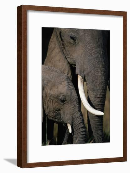 African Elephants-Paul Souders-Framed Photographic Print