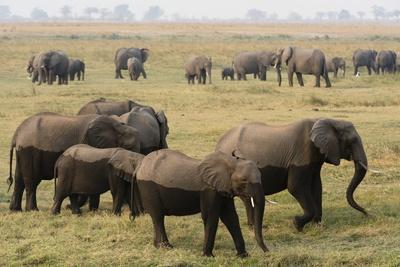 https://imgc.artprintimages.com/img/print/african-elephants_u-l-pzqpfg0.jpg?p=0
