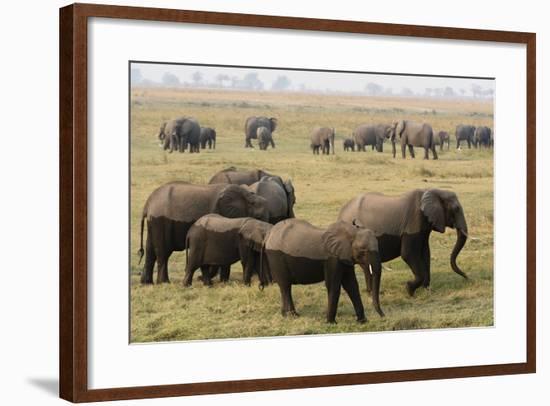 African Elephants-Sergio Pitamitz-Framed Photographic Print