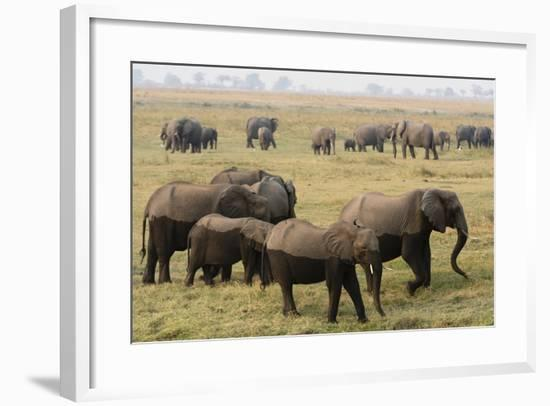 African Elephants-Sergio Pitamitz-Framed Photographic Print