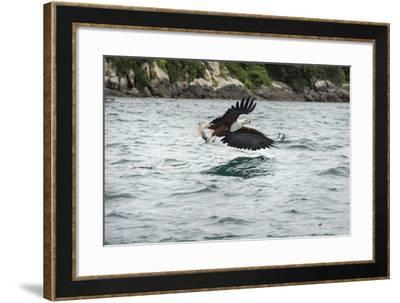 African Fish Eagle (Haliaeetus Vocoder), Bird of Prey, Malawi, Africa-Janette Hill-Framed Photographic Print