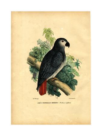 https://imgc.artprintimages.com/img/print/african-grey-parrot-1863-79_u-l-purjnh0.jpg?p=0
