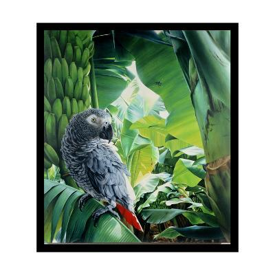 African Grey Parrot, 1990-Sandra Lawrence-Giclee Print
