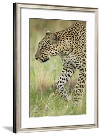 African Leopard-Mary Ann McDonald-Framed Photographic Print