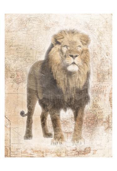 African Lion-Jace Grey-Art Print