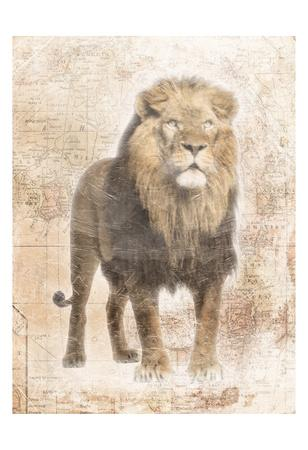 https://imgc.artprintimages.com/img/print/african-lion_u-l-f8iwjh0.jpg?p=0