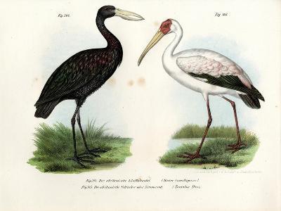 African Openbill Stork, 1864--Giclee Print