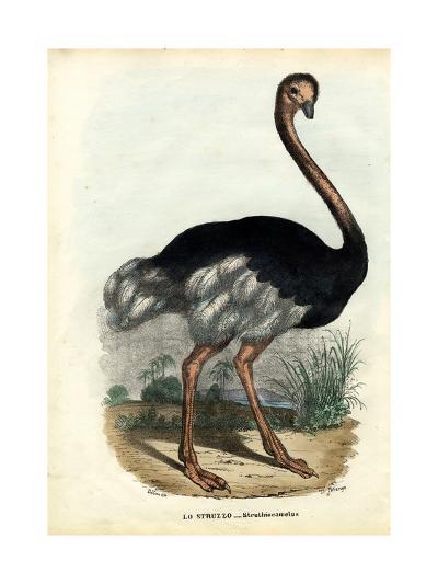 African Ostrich, 1863-79-Raimundo Petraroja-Giclee Print