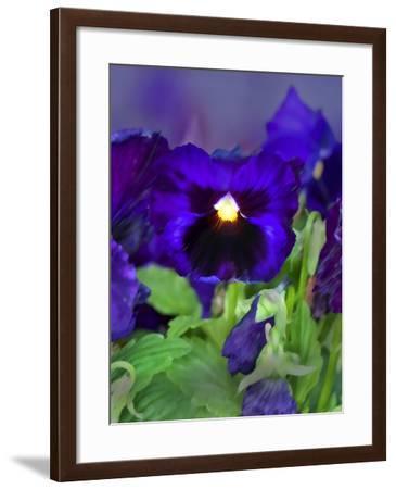African Pan Orchid-Dana Brett Munach-Framed Giclee Print