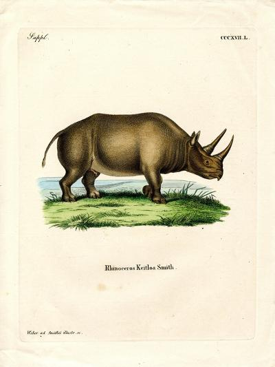 African Rhinoceros--Giclee Print