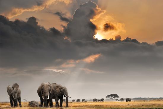 African Sunset with Elephants-Oleg Znamenskiy-Photographic Print