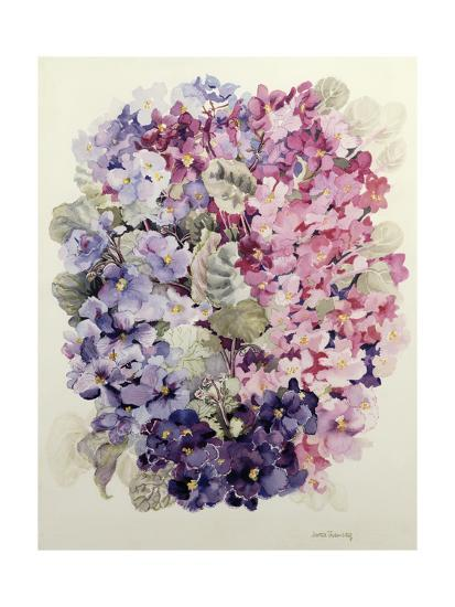 African Violets-Joan Thewsey-Giclee Print