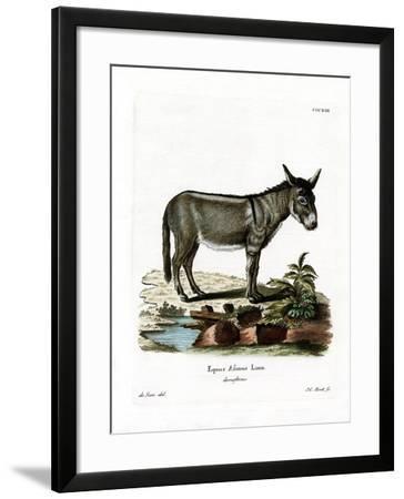 African Wild Ass--Framed Giclee Print