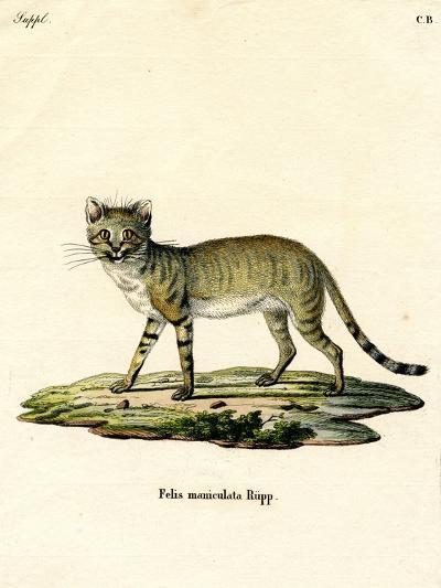 African Wild Cat--Giclee Print