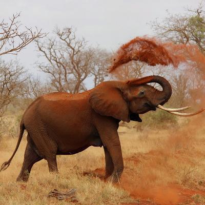 African Wildlife Elephant-Wonderful Dream-Art Print