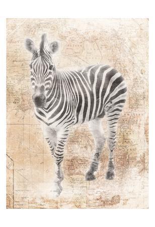 https://imgc.artprintimages.com/img/print/african-zebra_u-l-f8iwji0.jpg?p=0