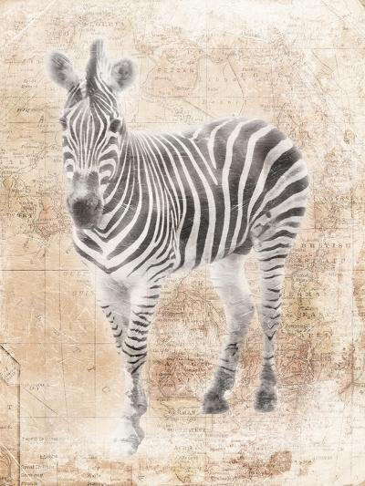 African Zebra-Jace Grey-Art Print