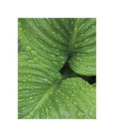 After the Rain 6827-Brian Leighton-Giclee Print