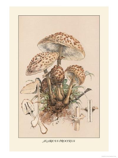 Agaricus Procerus-William Hamilton Gibson-Art Print