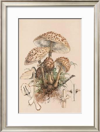 Agaricus Procerus Art Print William Hamilton Gibson Art Com