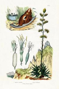 Agate Snail, 1833-39