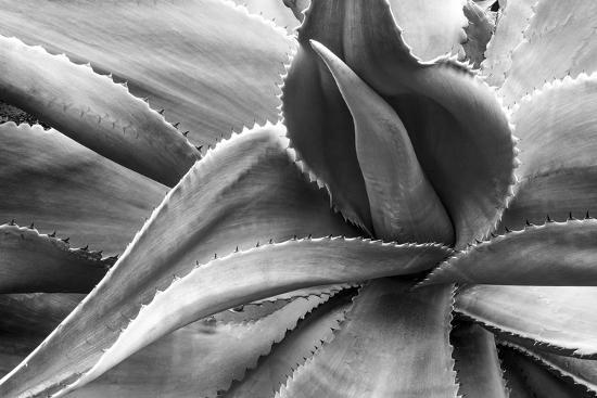 Agave Americana-Moises Levy-Photographic Print