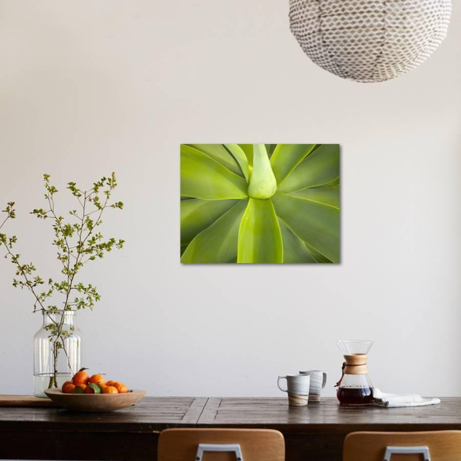 Agave Attenuata of Mexico Has Edible Flowers, Leaves, Stalks and Sap  Photographic Print by John Eastcott & Yva Momatiuk | Art com