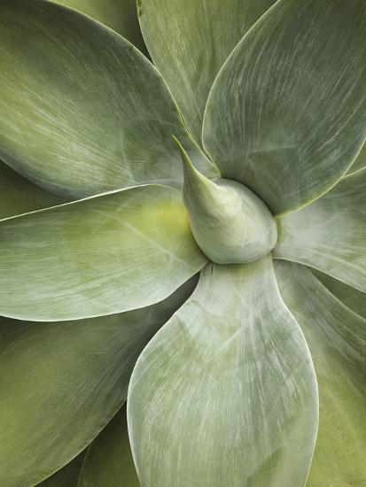 Agave Cactus, Longwood Gardens, Pennsylvania, Usa-Adam Jones-Photographic Print