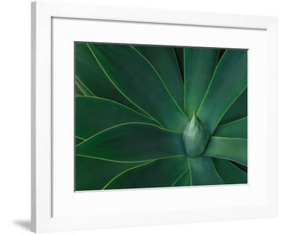 Agave II-William Neill-Framed Giclee Print
