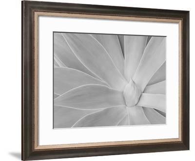 Agave III-William Neill-Framed Giclee Print