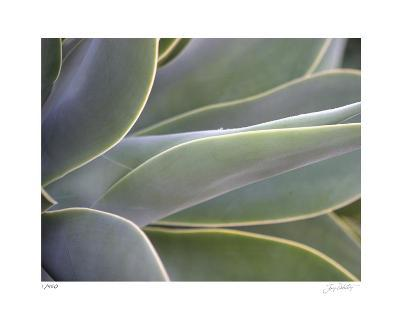 Agave IV-Joy Doherty-Limited Edition
