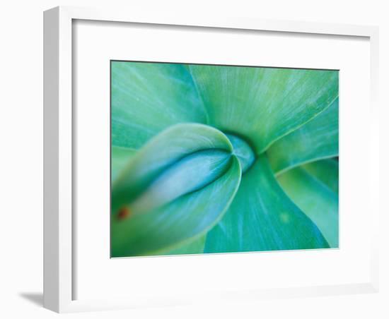 Agave Plant Detail, University of North Carolina at Charlotte Botanical Gardens, USA-Brent Bergherm-Framed Photographic Print