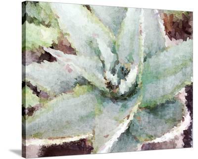 Agave Sebastiana--Stretched Canvas Print