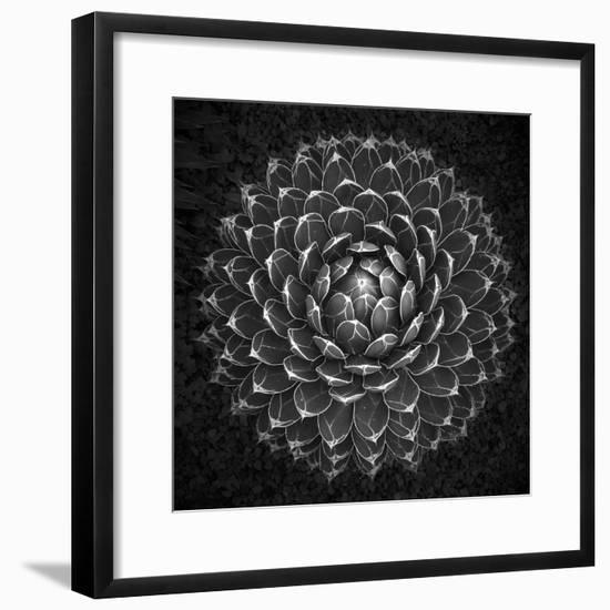 Agave Victoria-Moises Levy-Framed Photographic Print