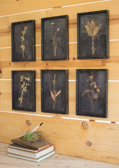 Aged Botanical Print Set--Alternative Wall Decor