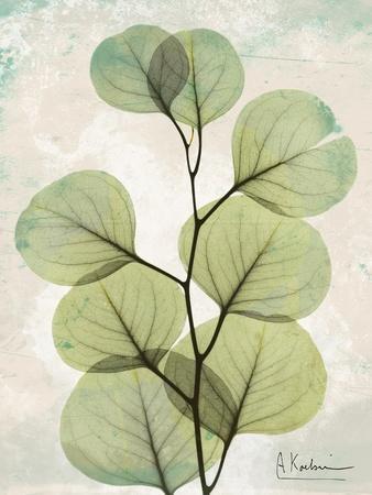 https://imgc.artprintimages.com/img/print/aged-stone-eucalyptus_u-l-pyjth10.jpg?p=0