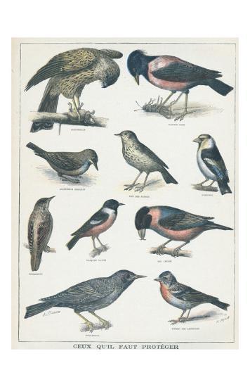 Agricultural Bird #2s--Art Print