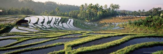 Agricultural Landscape of Rice Fields and Terraces, Indonesia, Southeast Asia-Bruno Morandi-Photographic Print