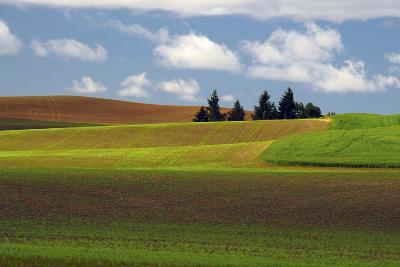 Agriculture, Palouse View, Whitman County, Washington, USA-Michel Hersen-Photographic Print