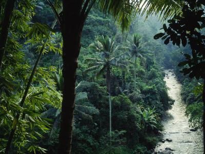Agung River Cuts Through Desnse Jungle and Palm Trees--Photographic Print